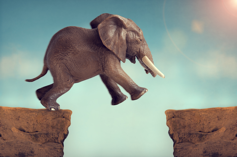 elephant leaping