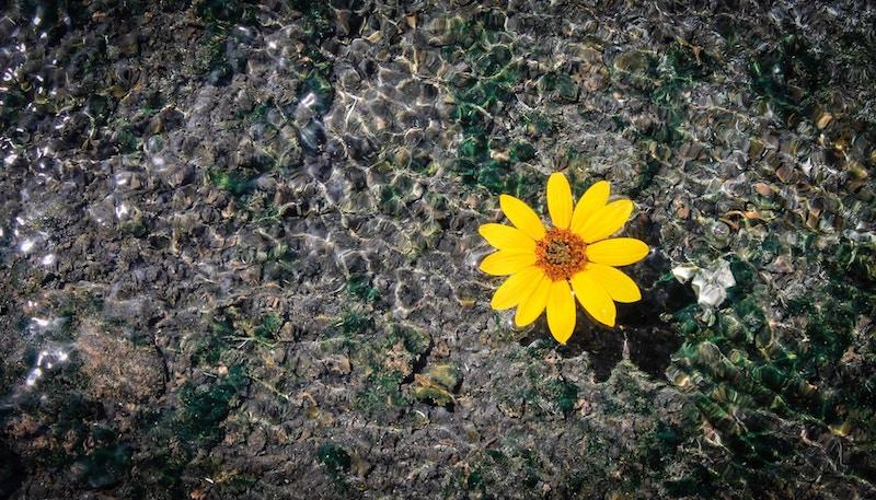 yellow flower on spiritual path