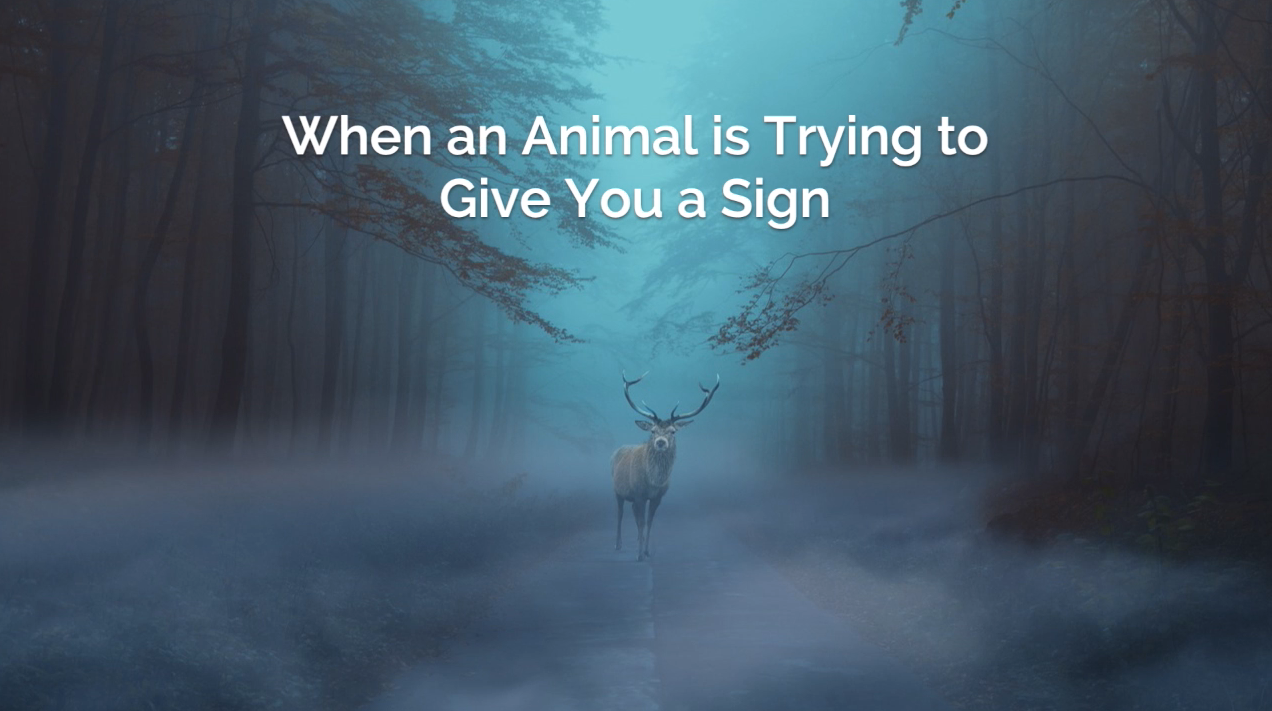 Spiritual Messages from Animals